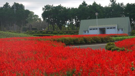 Ariakenomori Flowerpark