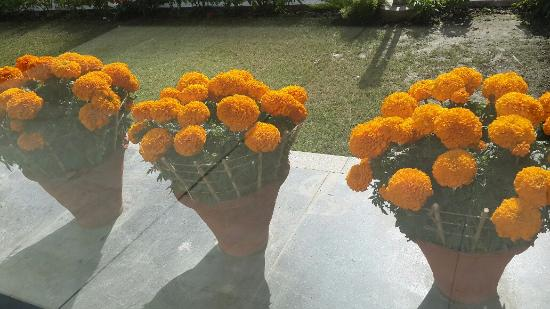 Shivalik View: Marigold blossoms at the front entrance!