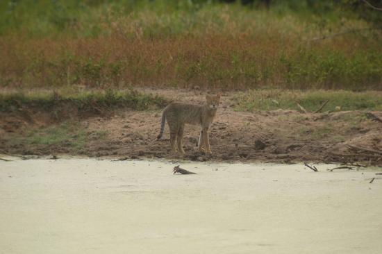 Foto Uda Walawe National Park