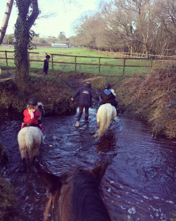 Photos Of Arniss Equestrian Fordingbridge Attraction