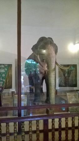 Raja Museum