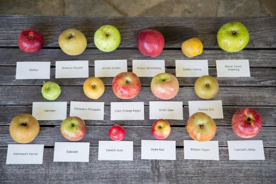 Dugspur, VA: The Apple Harvest Festival gives customers a chance to taste many unique varieties grown onsite.
