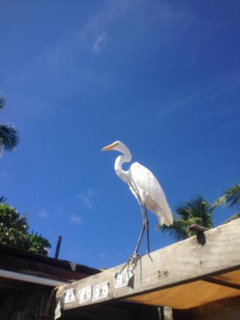 Lake Monroe, FL: Robbies islandamarada
