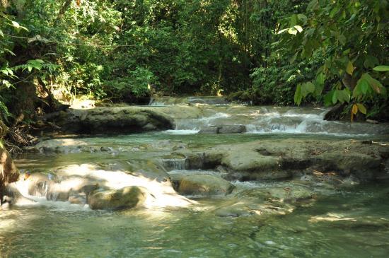 Savanna La Mar, Jamajka: trovarsi nel mezzo di una foresta tropicale e risalire fiume! Impagabile anche per imbranati com