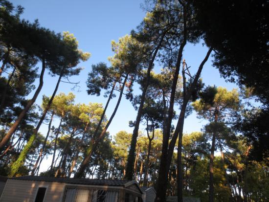 La piscine couverte picture of camping les biches saint for Camping quiberon piscine couverte