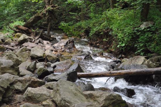 Amicalola Falls State Park صورة فوتوغرافية