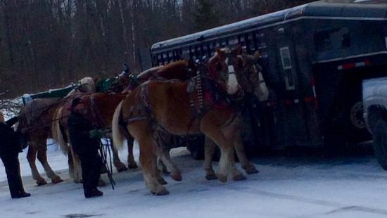 Hillman, MI: Our Horses