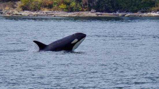 Sidney, Canada: photo0.jpg