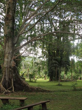 Luxury Jungle Resort