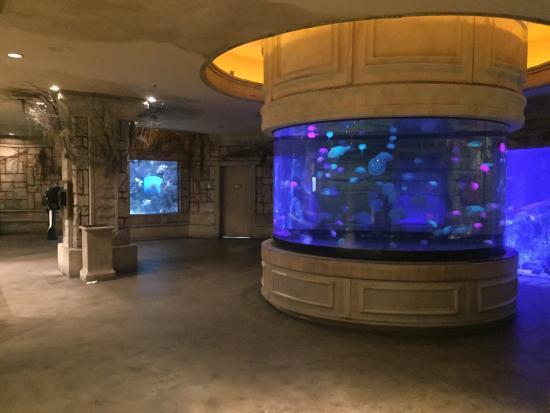 Picture Of Mandalay Bay Aquarium Las Vegas