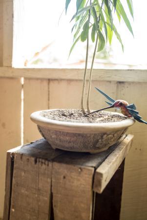 El Remate, Guatemala: Colibrí