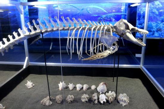 Museum Koleksi D' Bone