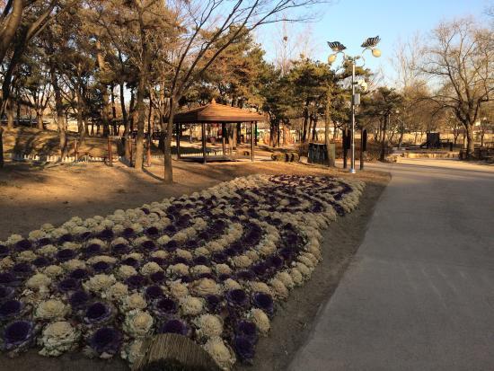 龙山家庭公园