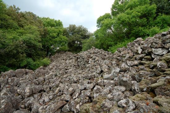 Riserva Naturale Regionale Selva del Lamone
