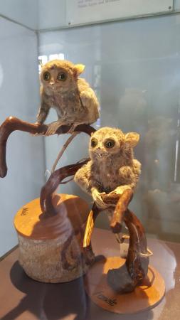 Bohol National Museum: 20160202_120840_large.jpg