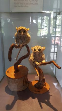 Bohol National Museum: 20160202_120833_large.jpg