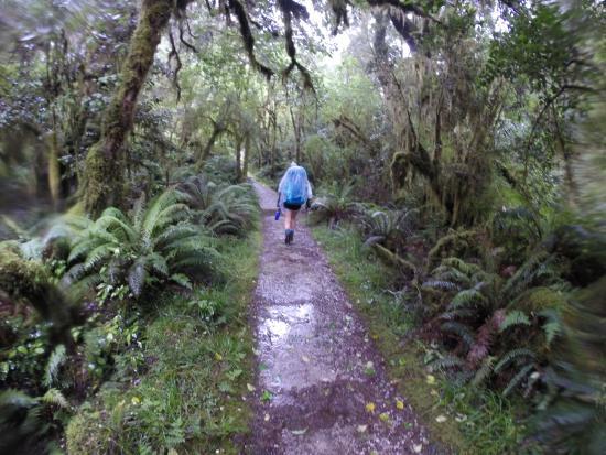 Fiordland National Park صورة فوتوغرافية