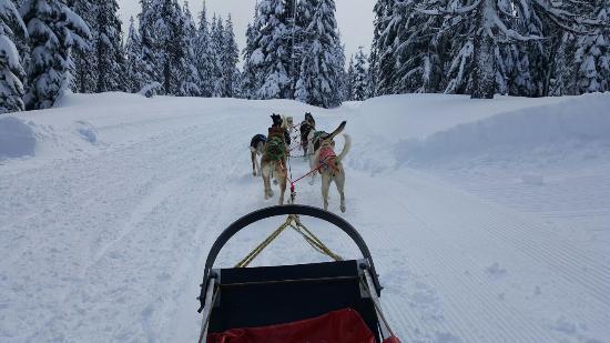 Oregon Trail of Dreams : 20160131_121013_large.jpg