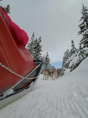 Oregon Trail of Dreams : 20160131_123014_large.jpg