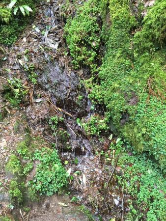 Torc Waterfall: photo5.jpg