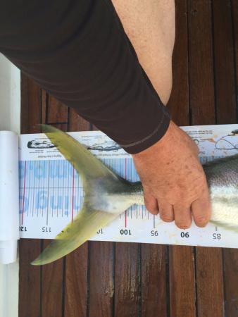Mangawhai, นิวซีแลนด์: Yellow tail Kingfish - they grow pretty big out there!