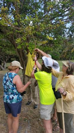 Spring Bay, Bequia: Must-Do Plantation Tour