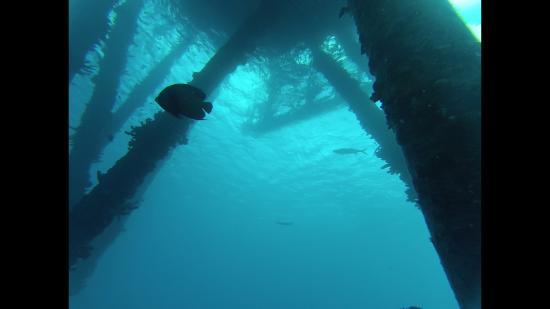 Kralendijk, Bonaire: Bari reef