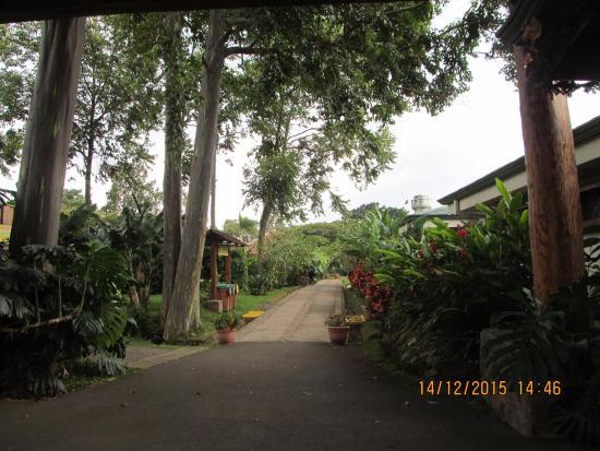 Национальный парк Поас-Волькано, Коста-Рика: Passeio na plantação de café.