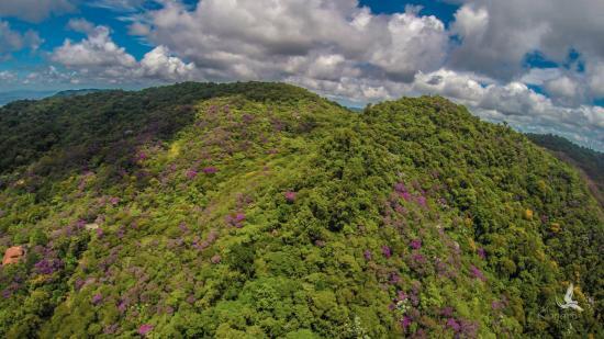 Serra Bonita Reserve