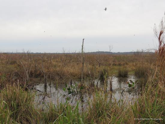 Micanopy, فلوريدا: La Chua Trail at Paynes Prairie