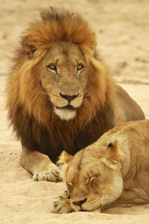 Foto de Leopard Hills Private Game Reserve