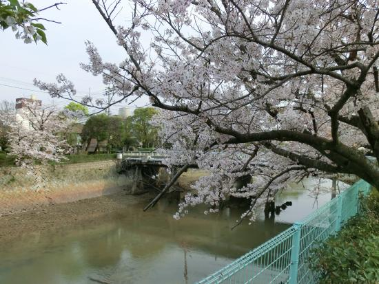 Ube, Japón: 春の桜は見事です