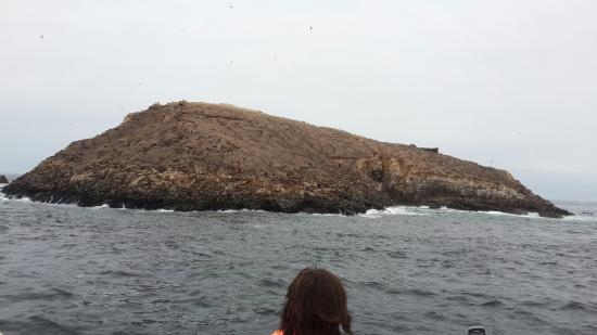 Callao, Perú: Islas Palomino