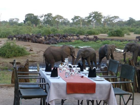 ‪‪Elephant Valley Lodge‬: Dining in the Boma‬