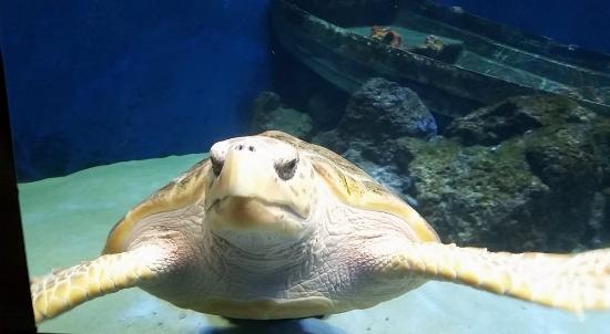 Imagen de Birch Aquarium at Scripps