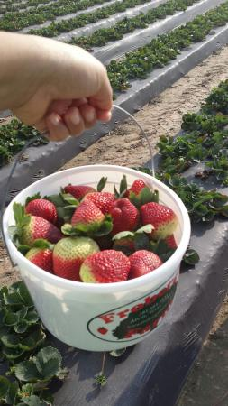 Alvin, TX: Froberg's Farm