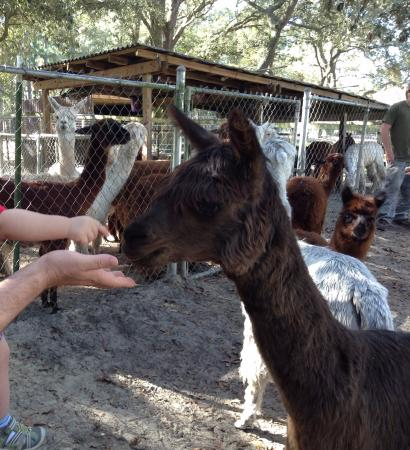 Funny Farm Alpacas