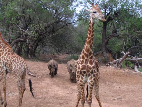 Mkuze Game Reserve-billede