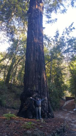 Glen Oaks Big Sur Photo