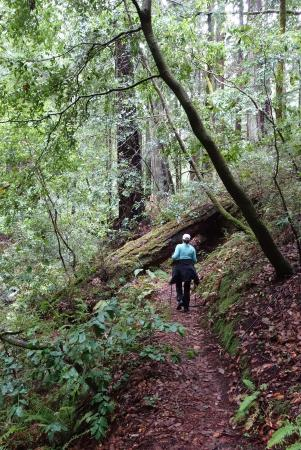Boulder Creek, CA: Timm's Creek Trail, Jan. 2016 - we were the only ones on it!