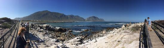 Betty's Bay, Afrika Selatan: photo1.jpg