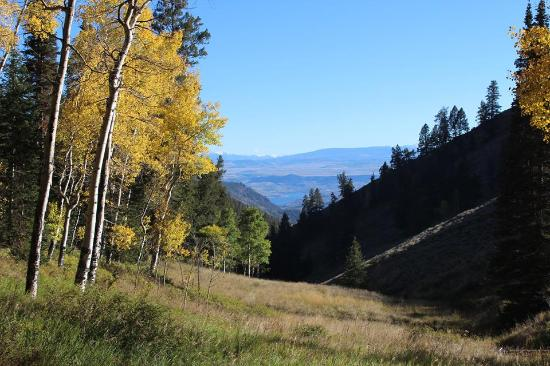 Gunnison, CO: Fall colors