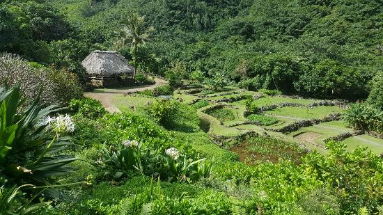 Spectacular Morning Walk Picture Of Limahuli Garden And