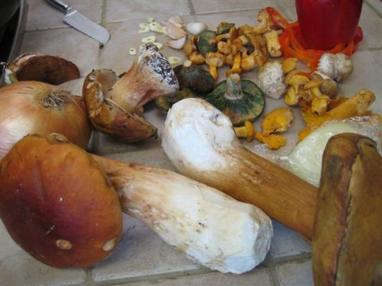 Long Beach, WA: We cook with local wild mushrooms