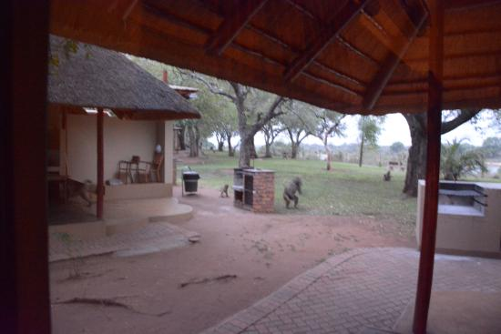 Lower Sabie Restcamp Photo
