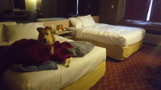 Microtel Inn & Suites by Wyndham Maggie Valley: Snapchat-5604597328868956563_large.jpg