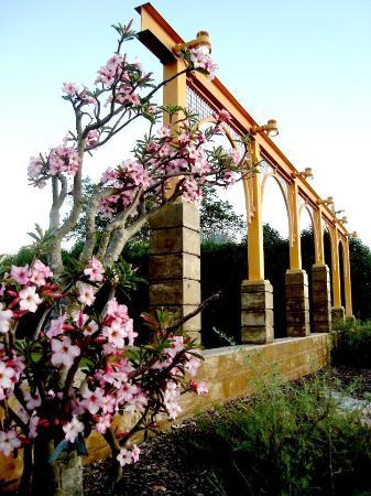 Mackay Region, أستراليا: Take a relaxing stroll through our beautiful Botanical Gardens