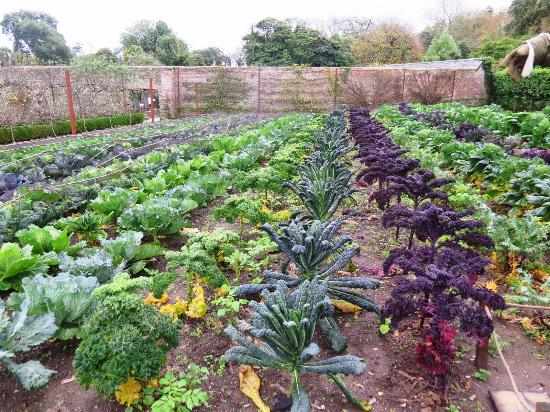 St Austell, UK: Fall vegetables at the Lost Gardens of Heligan