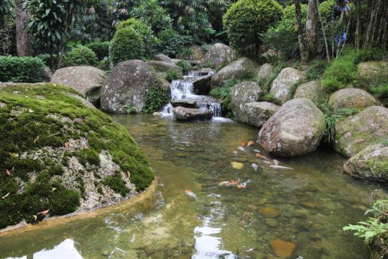 Bentong-billede