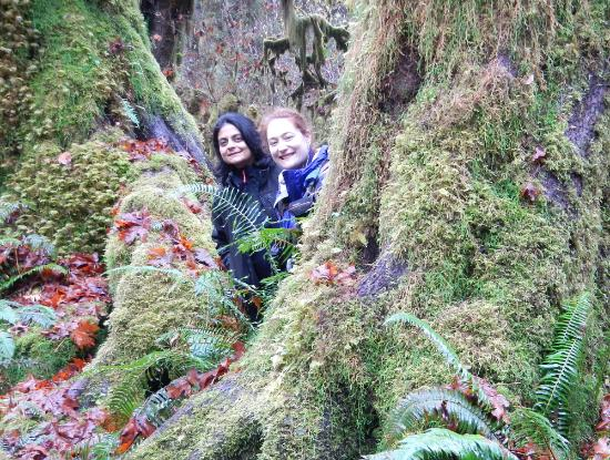 Port Angeles, WA: Experience Olympic's Rainforest with us!